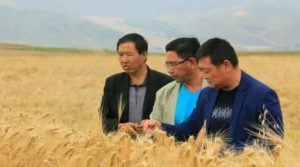 Qinghai uses big data to build a plateau characteristic wisdom agriculture and animal husbandry